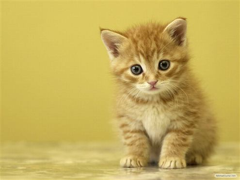 kucing-guntar-147