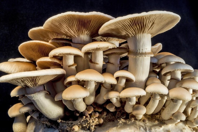 If You Want To live Long, Please Be Careful Of These 5 Foods - mushrooms