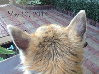 Ear - May 10, 2014