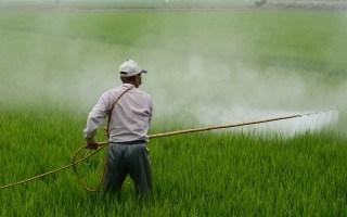 Herbicides faits maison