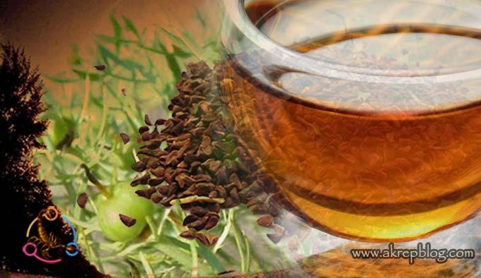 üzerlik tohumu çayı nasıl kullanılır, nasıl içilir, etkisi nasıl arttırılır?