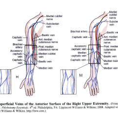 Antecubital Fossa Diagram 2002 Yamaha Grizzly Wiring Specimen Collection Procedure Performing A Venipuncture