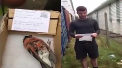 "Photo of بالفيديو .. شبان يكرمون "" طائراً ميتاً "" بجنازة مهيبة في بريطانيا"