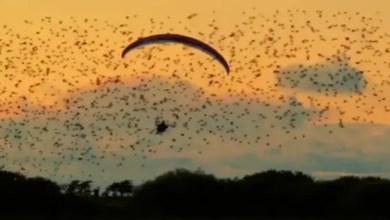 Photo of بالفيديو .. إسباني يحقق حلمه بالتحليق مع سرب ضخم من الطيور