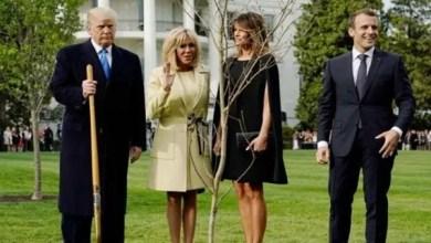 Photo of أين اختفت الشجرة التي زرعها ترامب و ماكرون في البيت الأبيض ؟