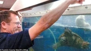 Photo of معلم أمريكي يواجه السجن لإطعامه جرواً لسلحفاة أمام تلاميذه