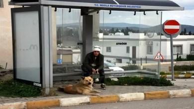 Photo of في تركيا .. كلب ينتظر أصحابه عاماً كاملاً بنفس المكان !