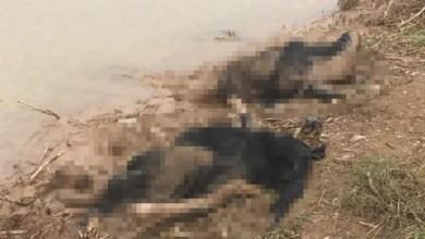 Photo of تركيا : العثور على جثث 3 نساء سوريات ملقاة في نهر وسط ظروف غامضة ( فيديو )
