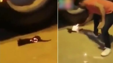 Photo of شبان مصريين يحرقون قطة حية .. و الأمن يتدخل ( فيديو )
