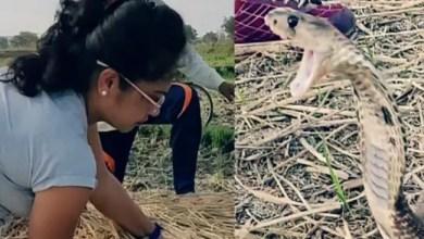 "Photo of فتاة هندية تمسك "" أفعى كوبرا "" عملاقة في كومة قش ( فيديو )"