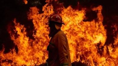 """صورة بعد 40 عاماً .. """" الشجرة الخادعة """" تقتل رجل إطفاء في أستراليا"""