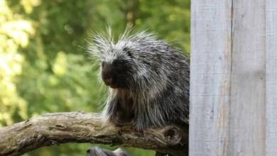 Photo of حديقة حيوان في ألمانيا تحذر مرتاديها من لمس حيوان هارب