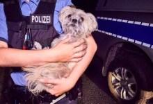 صورة في ألمانيا .. مطاردة الشرطة لزوجين أجنبيين تنتهي بسجنهما و إنقاذ كلبهما !