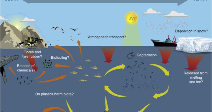 Knowledge gaps on trends in Arctic plastic pollution