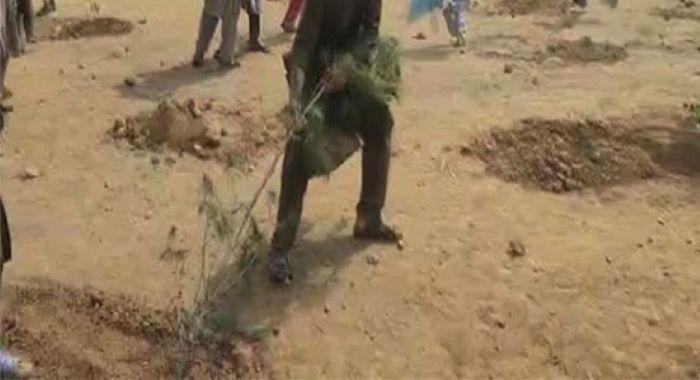 ضلع خیبر میں شجر کاری مہم ہلڑ بازی کا شکار