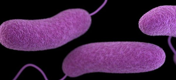 People can become infected with Vibrio vulnificus by consuming raw or undercooked seafood or exposing a wound to seawater.