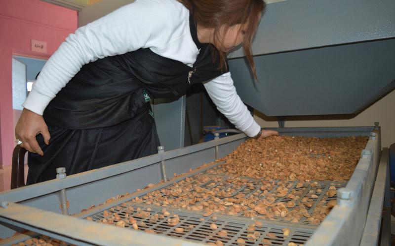 تثمين الإنتاج النباتي بتيزنيت يعزز دور المرأة القروية