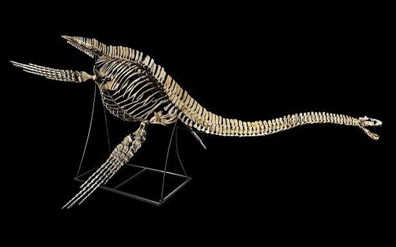 الديناصور المغربي المهرب يعود إلى وطنه المغرب