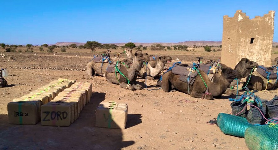 """10 ناقات محملة بطن من """"الحشيش"""".. المغرب يحبط عملية تهريب بالحدود الجزائرية"""