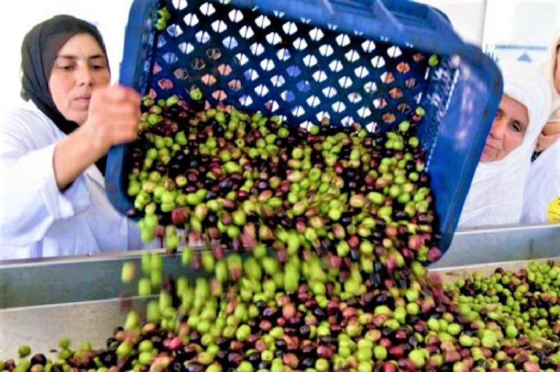معاصر الزيتون بجهة بني ملال.. انتعاشة إقتصادية تواكبها إجراءات مهمة
