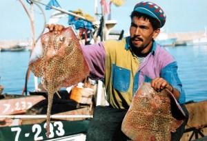 الصيد البحري: ارتفاع قيمة المنتجات المسوقة إلى أزيد من 2,5 مليار درهم بداية 2021
