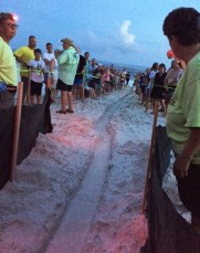 Share the Beach volunteers line a trench dug to help sea turtle hatchlings get to the Gulf. (Share the Beach)