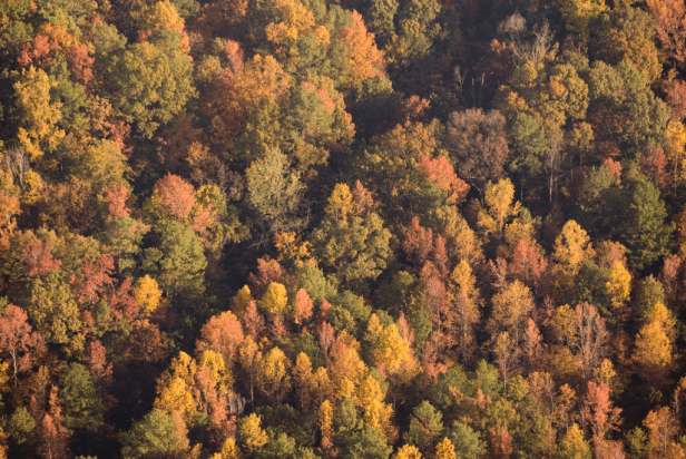 Celebrate Ruffner Mountain's 40th anniversary Saturday, Oct. 21. (Contributed)