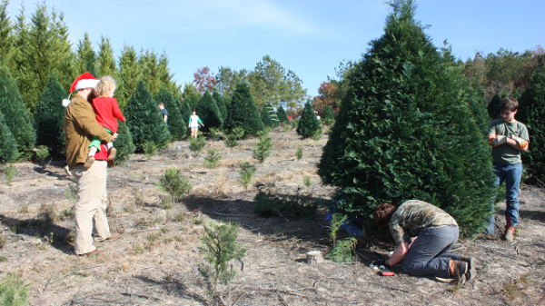 Pining for a real tree Alabama is shedding Christmas tree farms but those that