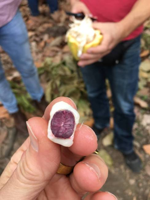 Kathy D'Agostino traveled to Ecuador last year to see how cacao, milk and sugar come together to form the single-origin chocolate she uses in her creations. (contributed)