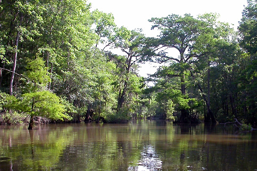 The approach to the Bottle Creek Indian Mounds in the Mobile-Tensaw River Delta. (Altairisfar, Wikipedia)