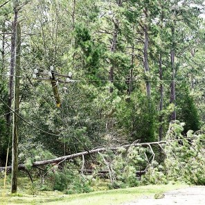 The storm uprooted trees as it passed through. (Wynter Byrd)