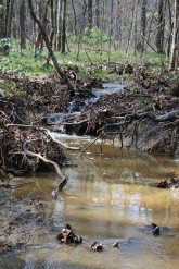 The grant funding also covers the assessment of ways to better protect two watersheds in the north-central portion of the state. (Geological Survey of Alabama)