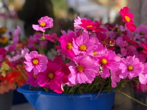 Hepzibah Farms provides beautiful blooming plants. (Contributed)