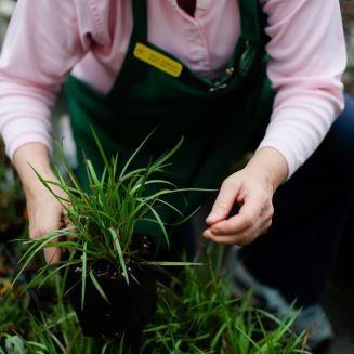 Get expert gardening tips. (Contributed)