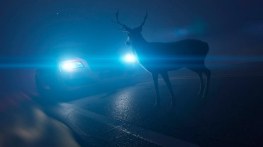 Crashes involving deer are more common than usual during both the Thanksgiving and Christmas holidays, but they are most common around Christmas. (Getty Images)