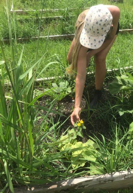Groundwork Mobile County recently completed its first Green Team youth employment program where six teens spent a month working in community gardens around Mobile County. (contributed)