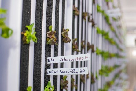 Plants grow in vertical rows in the converted, high-tech shipping container. (Auburn University)
