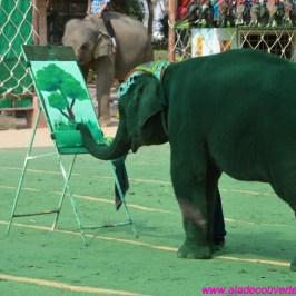 Art. 44 : Surin et le village des éléphants