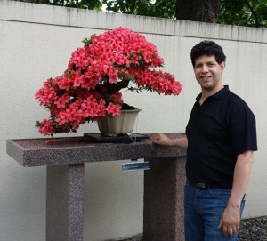 250 year old bonsai tree. This represents sound investment principles.