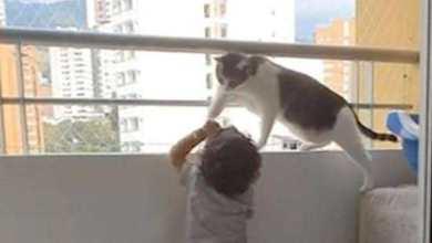 Photo of شاهد بالفيديو.. قطة تُنقذ طفل من موت محقق كاد أن يسقط من الشرفة