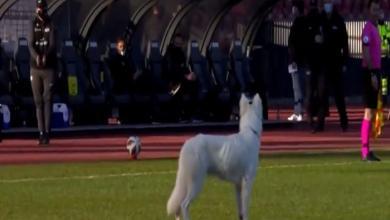 Photo of شاهد بالفيديو.. «كلب» يُجبر حكم على إيقاف مباراة في الدوري السويسري