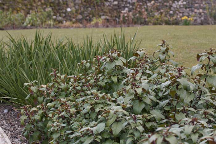 Milntown Gardens