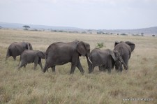 The Serengeti Big 5