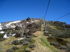 Snow Gum Trees on Kosciuszko