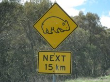 Watch out for the Wallabies!