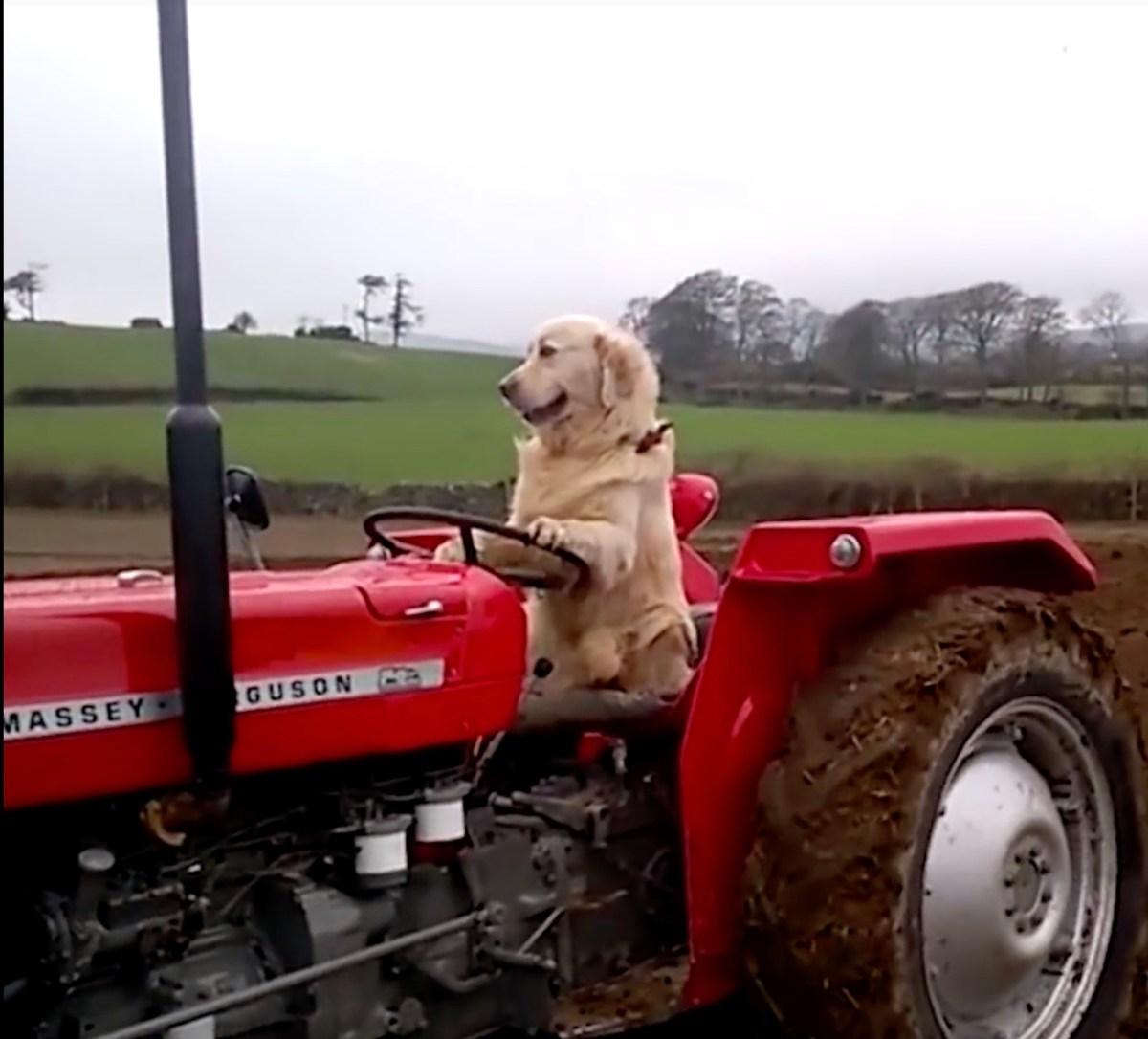 Hundar fick €17 000 i jordbruksbidrag