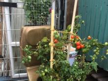 Emmaus odling växtkraft