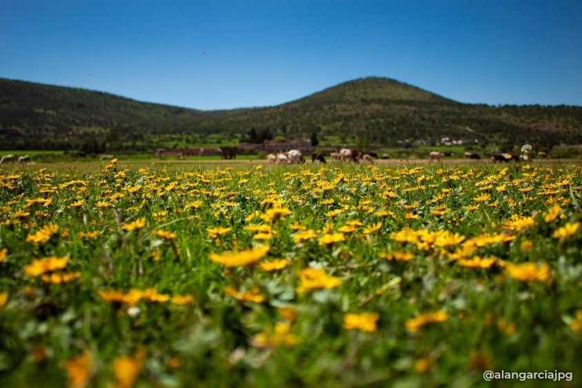Campos de Apan, Hidalgo; llenos de vida
