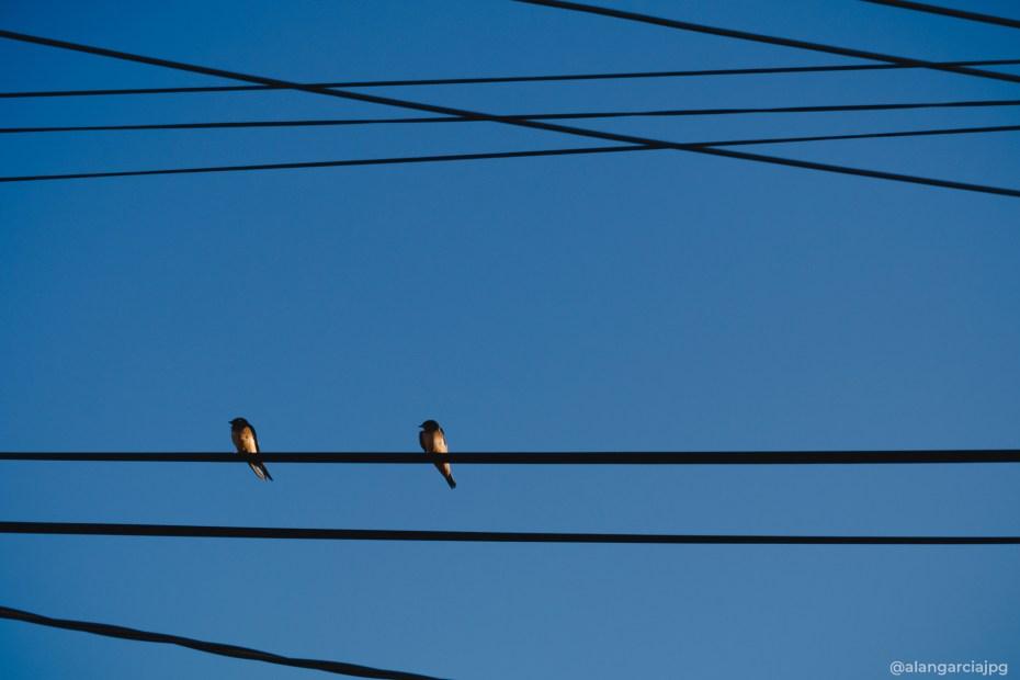 Par de pajaritos sobre un cable de luz eléctrica.