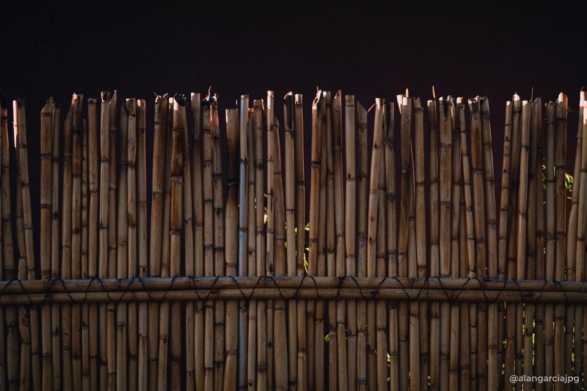 Una cerca de carrizos en la localidad de El Daxtha, Actopan, Hidalgo.